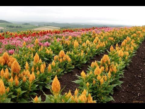 Однолетние тенелюбивые растения и цветы для сада: фото и