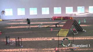 Agility Fun Match At Mccann Professional Dog Trainers 2010
