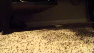 Rat Cam 92 - Boys and Girls Unite
