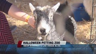 Neon Museum hosts Halloween petting zoo