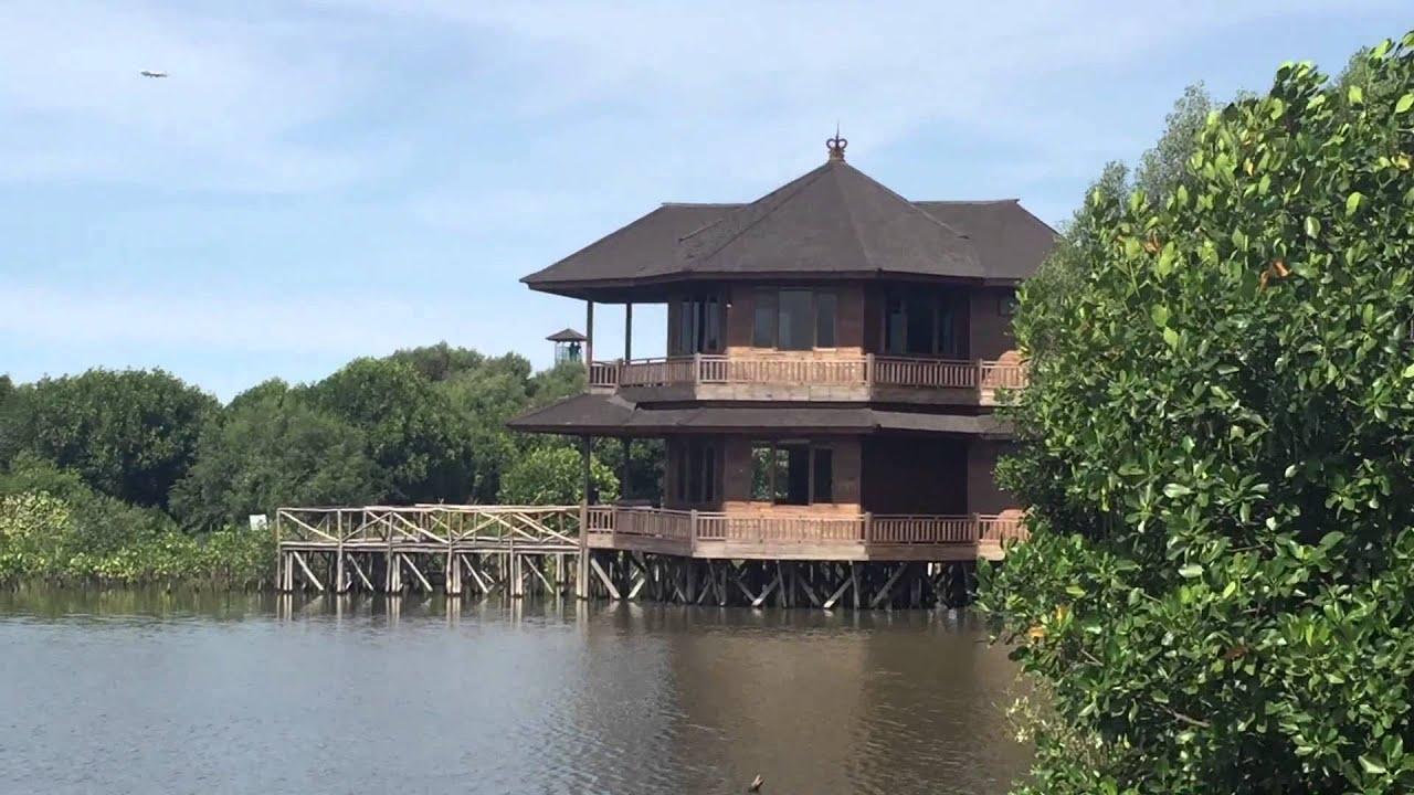 Wisata Alam Hutan Mangrove Angke Kapuk Jakarta Podomoro University Youtube