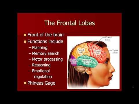 Biology of Mind and Behavior