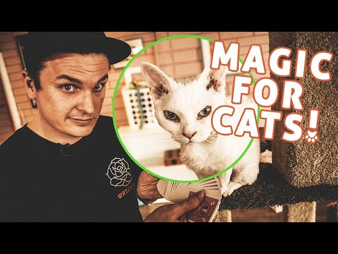 Magician Does Magic Tricks For Cats