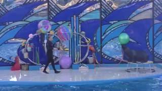 Морской котик в дельфинарии парка Ривьера города Сочи(Один из персонажей дельфинария. Отдельно снят морж и дельфины. Попали на вечерний сеанс в пасмурную погоду,..., 2016-06-07T21:16:13.000Z)