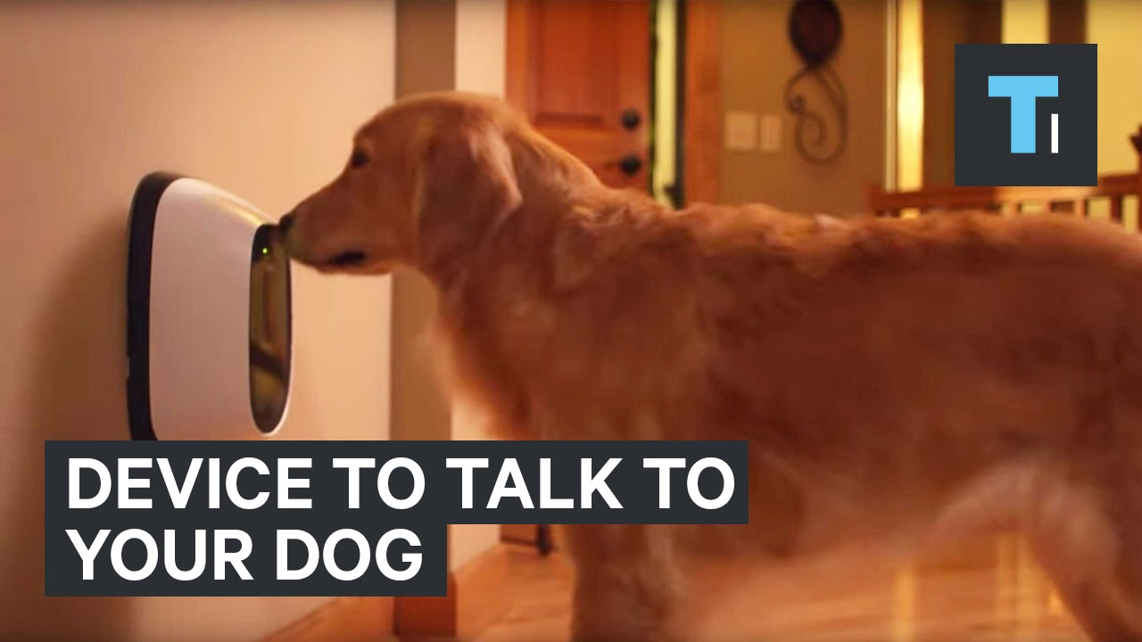 maxresdefault device to talk to your dog youtube