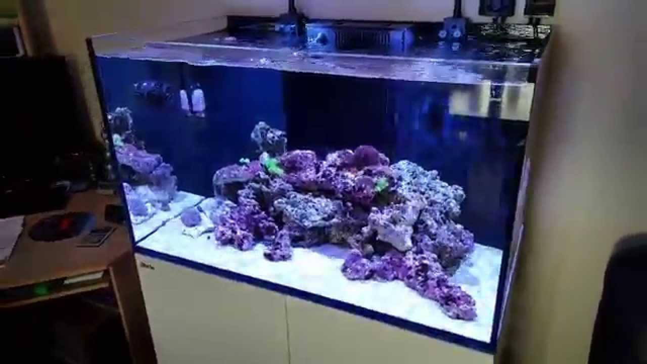 Red Sea Reefer 250 Week 3 Live Rock In Update Youtube