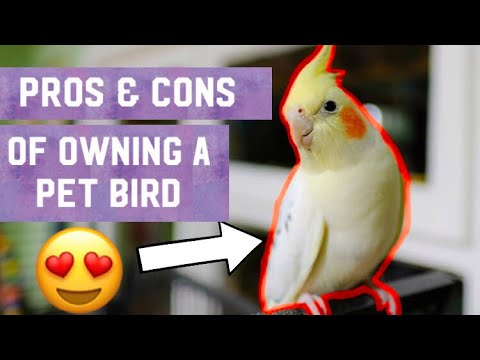 Pros & Cons Of Owning A Pet Bird *2019 UPDATE*