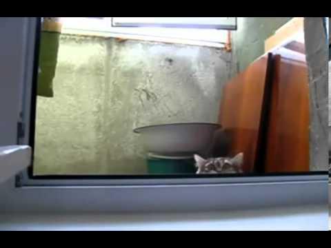 Animales graciosos, simpaticos, divertidos, asustados. Videos divertidos1 de mascotas.