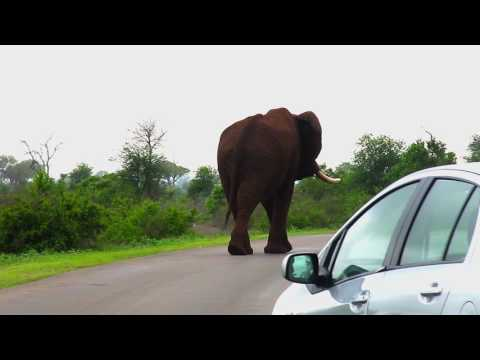 Overland Trip through Kruger & Mozambique