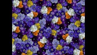 Как цветы влияют на ваше здоровье?