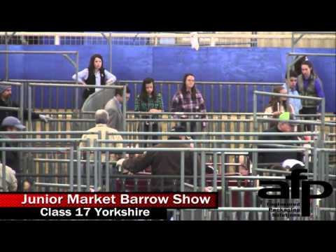 2016 Junior Market Barrow Show- Day 2
