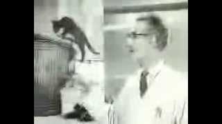 WHISKAS� UK - Vernieuwde Whiskas (1963)