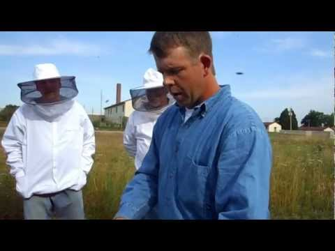 Learning Fields hive state inspection 2012