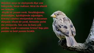 Allaha küsen kuşun hikayesi I Dini Hikayeler I Serçe Kuşu I Manidar Hikayeler I