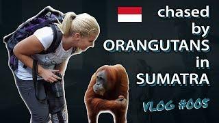 Chased by Orangutans in Sumatra (Bukit Lawang jungle vlog)