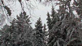 180204 В Прикамье лесодефицит!