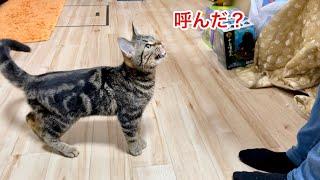 名前を呼ぶと鳴きながら側に寄ってくる子猫が可愛すぎたw