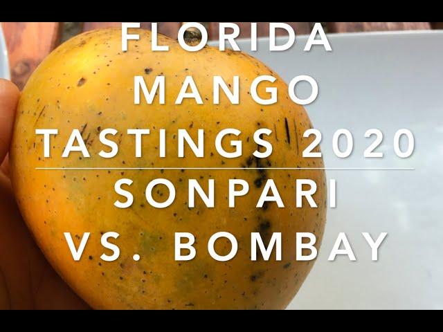 Mango Tastings 2020 - Sonpari vs Bombay mangoes (Indian varieties in Florida)