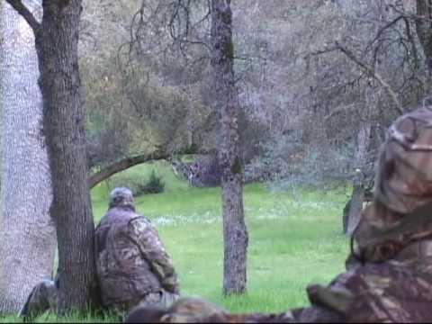 CA Turkey Hunt