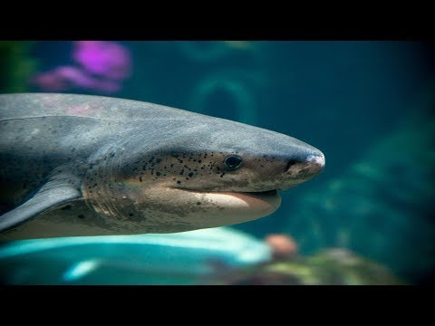 Live Shark Cam - Monterey Bay Aquarium