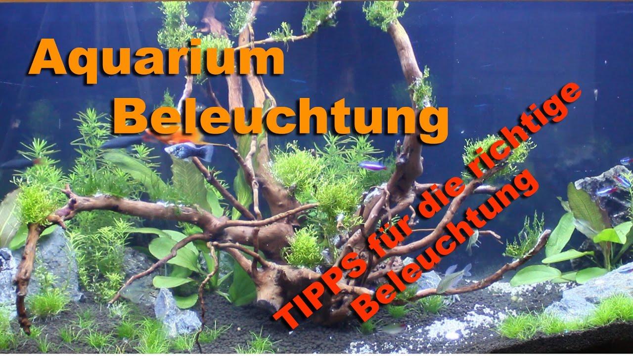 aquarium beleuchtung tipps f r die richtige beleuchtung youtube