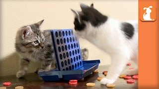 Kittens Play Connect 4, Aren't Very Good - Kitten Love
