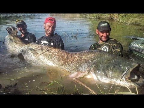 Catfishing In The Rio Ebro - Spain Episode 1 - HD By Catfish World