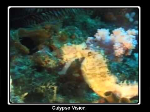 Download Puerto Galera - Scuba Diving with Cocktail Divers from Garden of Eden - Dive guide Randy