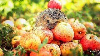 Что будет если есть яблоки каждый день