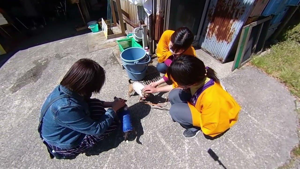 鳥取で、あやめ釣り(いけす釣り)