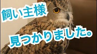 【保護しているフクロウに関して】ご協力ありがとうございました!