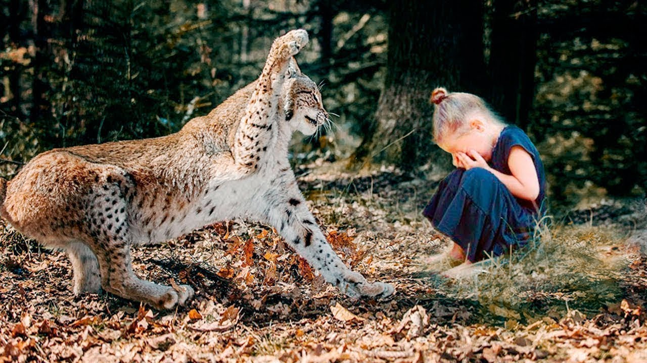 The parents cried when they learned how the lynx repaid them for its rescue...