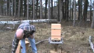 How to set up a Warre hive