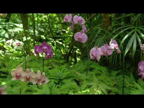 Il Magico Mondo delle Piante - La Phalaenopsis