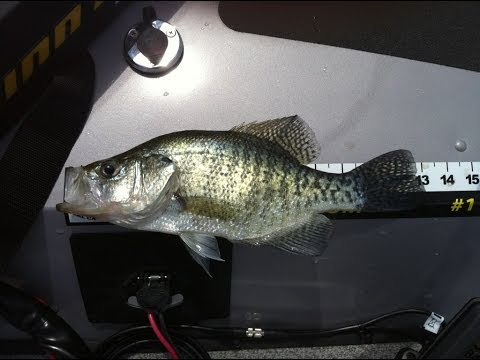 Crappie on the MossBacks