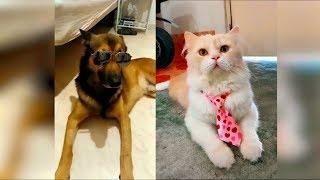 Новые приколы с животными 2019, лучшие видео про кошек март 2019, подборка приколов про животных #41