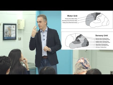 Jordan Peterson - What is consciousness & how does it relate to the brain?