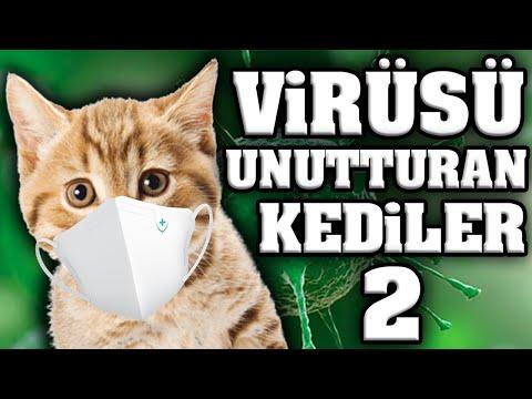 Virüsü Unutturacak Konuşan Kediler 2 - En Komik Kedi Videoları