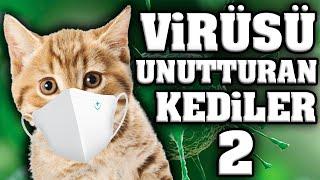 Virüsü Unutturacak Konuşan Kediler 2 - En Komik Kedi ları