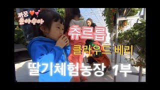 [1부]딸기농장/클라우드베리/딸기체험/딸기컵케이크/딸기