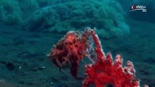 Die verrücktesten Kreaturen der Tiefsee - Doku HD