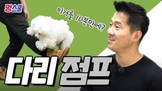 강아지 '다리 점프' 해보개|강형욱의 멍스쿨