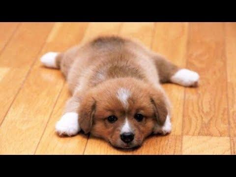 Лучшие Приколы про собак | Подборка приколов про собак и щенков #8