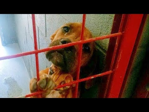 dog-cries-every-night-as-no-one-wants-to-adopt-her,-shelter-shares-her-photo-as-last-hope