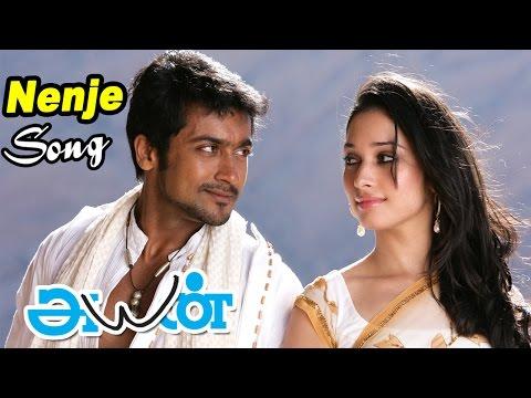 Ayan | Ayan Songs | Tamil Movie Video Songs | Nenje Nenje Video Song | Harris Jeyaraj HITS| Surya