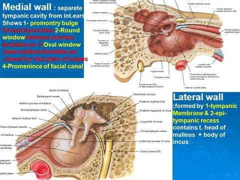 121 Middle ear cavity II - YouTube