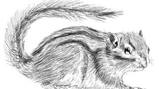How to draw a little furry Squirrel
