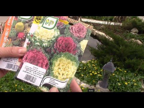 Семена.  Посылка с семенами в подарок!