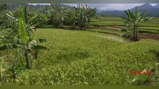 Happy Asmara Rasa Yang Salah Tanpa Iklan
