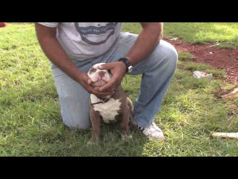 dog-training-&-care-:-how-to-get-a-puppy-to-stop-biting